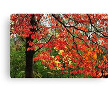 Autumn in Mount Beauty Canvas Print