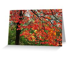 Autumn in Mount Beauty Greeting Card