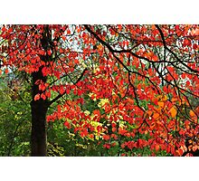 Autumn in Mount Beauty Photographic Print