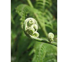 Twirly Fern Frond Photographic Print