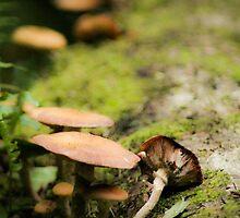 Wild Fairy Mushroom Log by EnchantedFable
