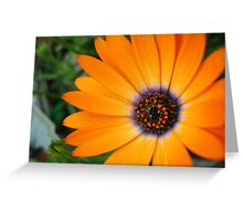 Ring Of Fire - Flower Greeting Card