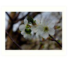 Promising Bloom - Apple Tree Art Print
