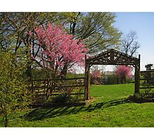 Spring Redbuds in a Little Park Photographic Print