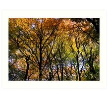 Tree Canopy, Ness Woods. Art Print