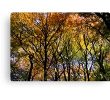 Tree Canopy, Ness Woods. Canvas Print