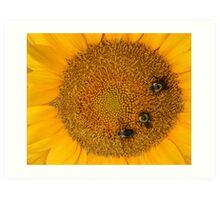 3 Bee Sunflower Art Print