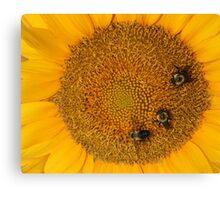 3 Bee Sunflower Canvas Print