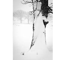 Snow Drift Tree Photographic Print