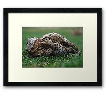 Toad Ball Framed Print