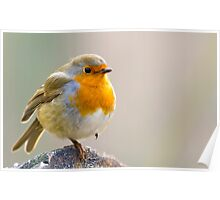 A Robin Perched on a Log Poster