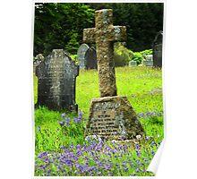 Bluebells in a graveyard, Dartmoor, UK  Poster