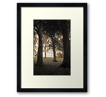 Trees of Castlegrove Framed Print