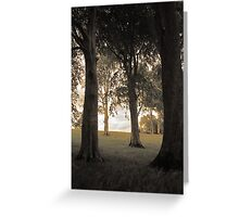 Trees of Castlegrove Greeting Card