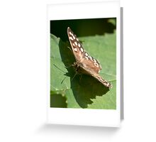 Speckled wood butterfly Greeting Card