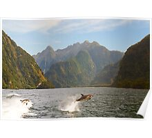 Hall Arm in Doubtful Sound Poster