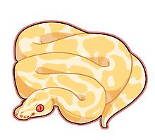 Albino Ball Python by cargorabbit