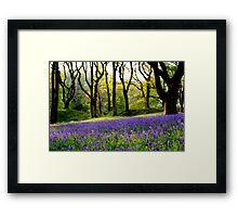 Spring Blue Bells, Blackberry Camp, Devon Framed Print