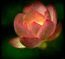 The Magick Lotus  by Chris Lord