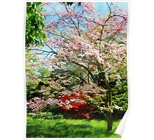 Pink Flowering Dogwood Poster