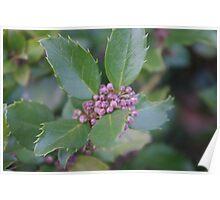 Spring blossoms - bokeh Poster
