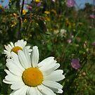 gowans - wildflower bank by Babz Runcie