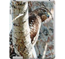 Red Tail Hawk iPad Case/Skin