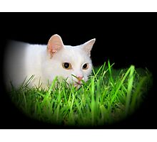 Ready to Pounce! Photographic Print