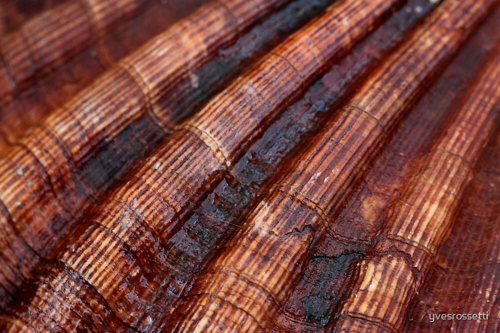 Connemara scallops by yvesrossetti
