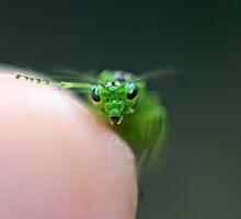 Hello Earthling! Alien Bug - Rhogocaster Viridis (Sawfly) by LisaRoberts