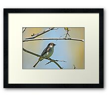 Willow Flycatcher (Empidonax traillii) Framed Print