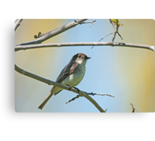 Willow Flycatcher (Empidonax traillii) Canvas Print