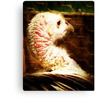 The one, that got away....... Canvas Print