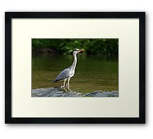 Fishing for din dins Framed Print
