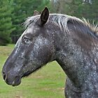 Other Horse by Daniel  Parent