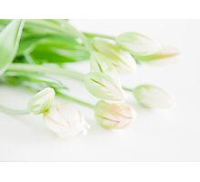 Sunshine Tulips Photographic Print