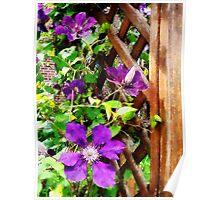 Purple Clematis on Trellis Poster