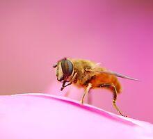 pink world by davvi