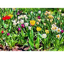 Spring colours - painted Photographic Print