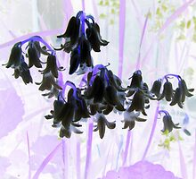 Inverted Spring Flowers ... by Patricia  Butler