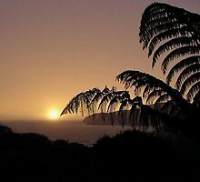 New Zealand fern at sunset......!  by Roy  Massicks