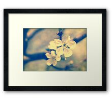 Cherry Blossoms arrive Framed Print