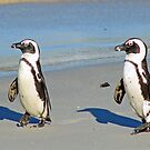 The march of the penguins! by jozi1