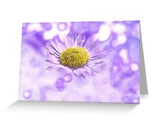 Wild Daisy in Lavender Light Greeting Card
