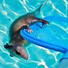A near drowning by Ann Reece