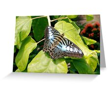 Bluer tones on a Clipper Butterfly Greeting Card