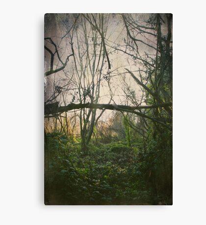 I'll Find My Way Canvas Print