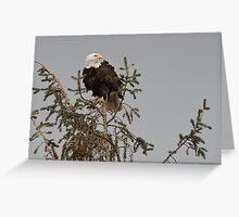 Bald Eagle Posing Greeting Card