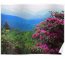 RHODODENDRON, BLUE RIDGE PARKWAY Poster