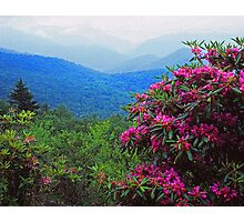 RHODODENDRON, BLUE RIDGE PARKWAY Photographic Print